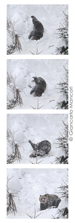 Giochi nella neve - ph. Giancarlo Mancori