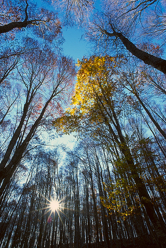 Beech forest in late fall - ph. F. Ferreri