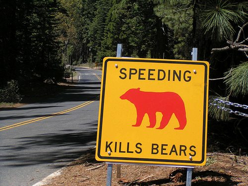 Speeding kills bears - fonte web