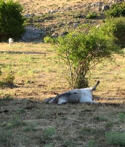 Minacce: bestiame morto, Gioia dei Marsi - ph. D.Valfrè