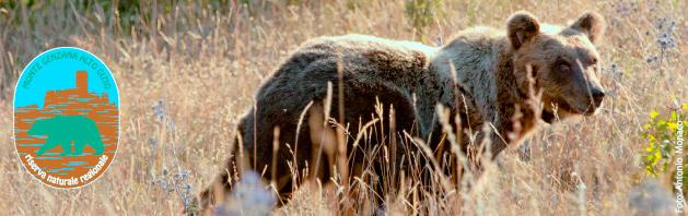 Locandina incontro orso Pettorano sul Gizio