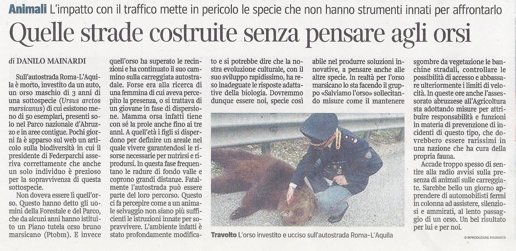 articolo orso