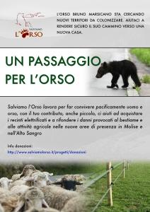 campagna_passaggio_orso