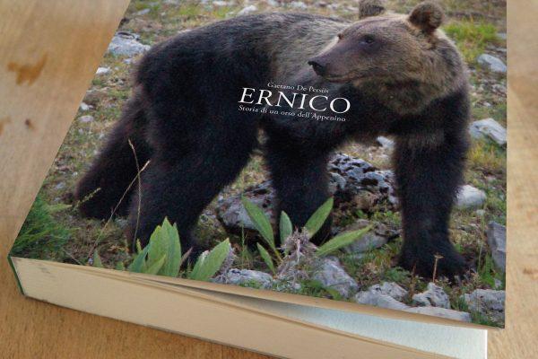 Ernico, storia di un orso dell'Appennino