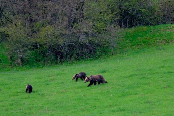TENT e Salviamo l'Orso insieme per la tutela dell'orso bruno marsicano